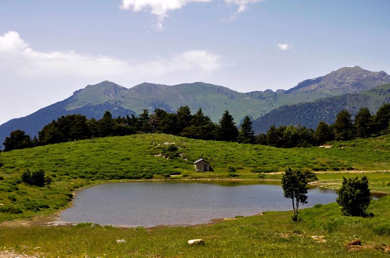 verano-en-vall-daran-vilac-albina-bosch-bosques