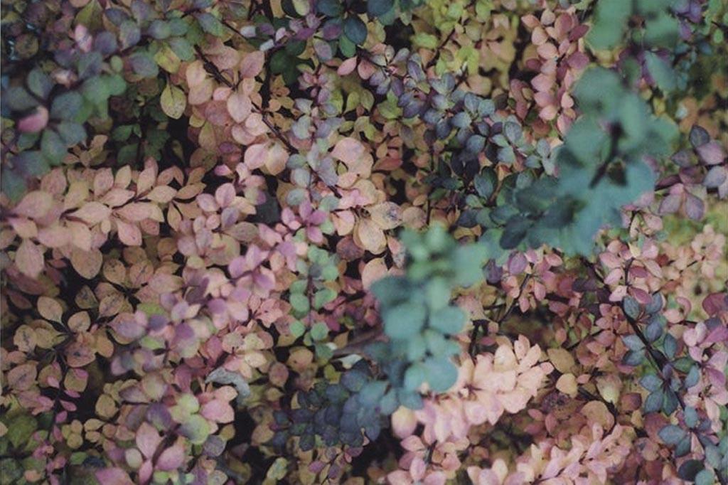 joidart-joias-albinabosch-valle-de-aran-viella-01