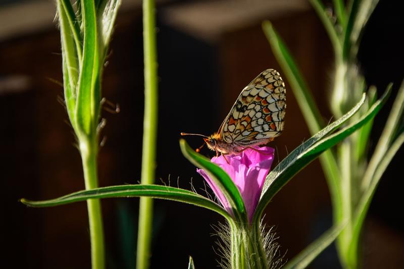papallona-val-daran-albina-bosch