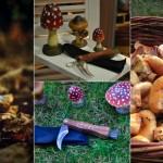 temporada-de-setas-otonio-jornadas-gastronomicas-val-daran-gastronomia-setas-niscalos-rovellons-hongos-albina-bosch-portada