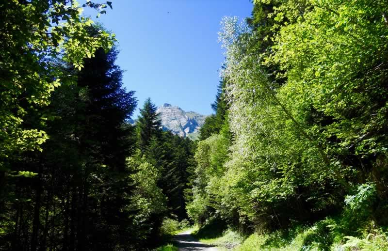 val-dran-primavera-albina-bosch