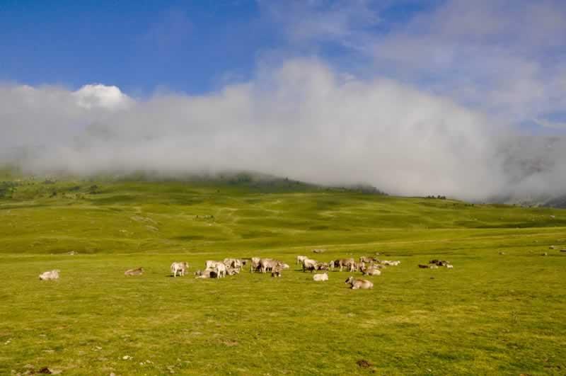 vacas-val-daran-albina-bosch-01