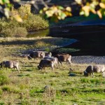 vacas-val-daran-albina-bosch-02