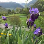 primavera-en-la-valdaran-albina-bosch-3