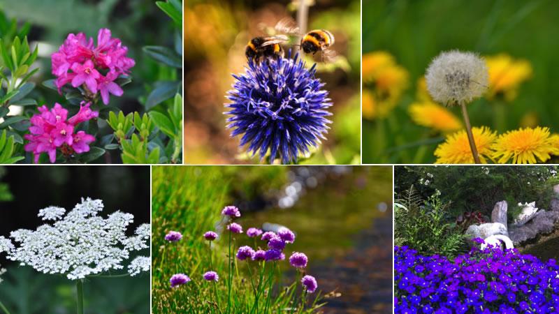 primavera-en-la-val-daran