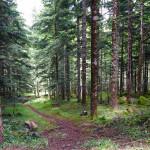 un-paseo-por-el-bosque-boles-dolor-aromas-y-fragancias-Albina-Bosch_1046
