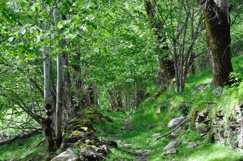 un-paseo-por-el-bosque-boles-dolor-aromas-y-fragancias-Albina-Bosch_2015 362