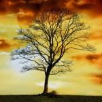 arbol-de-la-vida-historia-y-significado