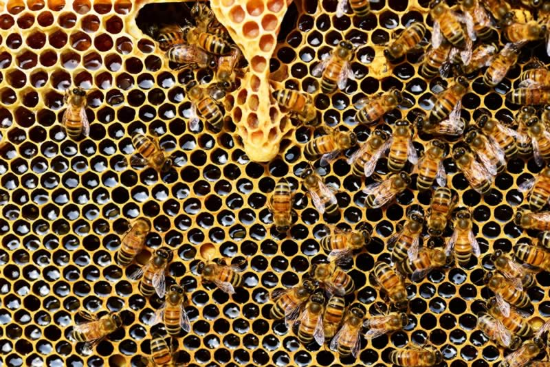 velas-cera-de-abeja-candles-cerabella-albina-bosch-56876